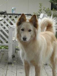 ドッグランでの飼い主のマナーを教えてください。また、犬同志で事故が起きたときはどのような対処があるのですか。うちの愛犬は30キロありますが、大丈夫でしょうか。