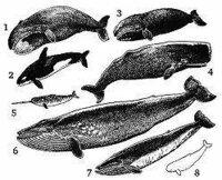 鯨、色々種類がありますが、シロナガス、マッコウ、ミンクなどなど 味違うんでしょうかね?