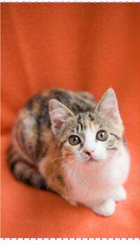 こちらの猫のポーズに名前があったらおしえてください。