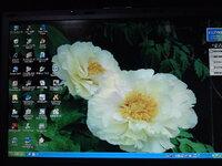 デスクトップの画像 こんばんは。皆さんはデスクトップの画像はいつも同じですか?昨日ボタンを見に行って黄色のボタンがきれいだったのでデスクトップに変えました。
