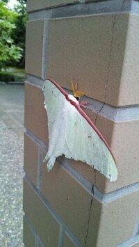 先日、家の前で見たこともない虫?を見つけ写真をとりました。この虫の正体が分かる方、お教えください。またその特徴やレア度など(笑)