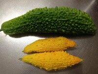 ゴーヤの実が小さいまま黄色になってしまいます・・・  グリーンカーテン用に植えたゴーヤ、緑の実に大きく育っていたのですが 最近小さいまま黄色くなってしまう実もあります。 原因はなんでしょうか?病気ですか? 現在、緑色で通常通りに育っている実もいくつもありますが、 小さいまま黄色になっている実も4つほどあります・・・  先週あたりから、この症状が出ているのですが 何かの病気でし...
