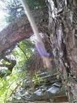 ムラサキイモムシ(毛虫かもです) ムラサキイモムシ   さっき、変わった芋虫を発見しました!  ムラサキイモみたいに結構鮮やかな紫色の芋虫です  2センチくらいでちっちゃくて、蔦みたいな葉っぱにいました...