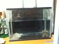 メダカの飼い方 この水槽で  ブクブク酸素を出すのもないし 水草もありません  雄二匹飼えますか?